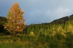De herfst in Slowaakse Bergen Stock Afbeelding