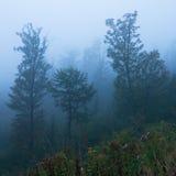 De herfst in Slowaakse Bergen Royalty-vrije Stock Afbeelding
