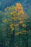 De herfst in Slowaakse Bergen Stock Fotografie