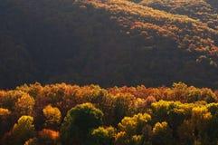 De herfst in Smokies Stock Afbeelding