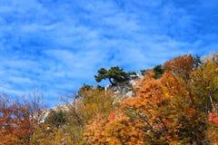 De herfst solitaire boom bovenop een berg Stock Afbeelding