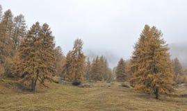 De herfst in St Moritz royalty-vrije stock foto's