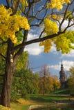 De herfst in stad Stock Fotografie