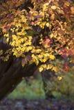 De herfst in stadspark Royalty-vrije Stock Foto