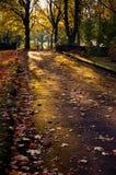 De herfst in stadstuin Royalty-vrije Stock Foto's
