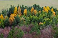 De herfst in Sulovske skaly! stock fotografie