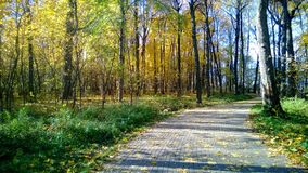De herfst in Suvorov-Park stock foto's