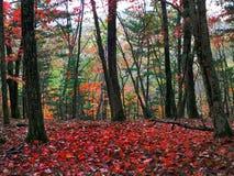De herfst in Taiga. Royalty-vrije Stock Foto