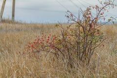 De herfst in de Tavri-steppe Royalty-vrije Stock Afbeeldingen