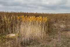 De herfst in de Tavri-steppe Stock Afbeeldingen