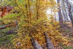 De herfst toneel Royalty-vrije Stock Afbeelding