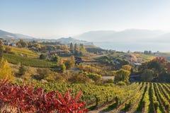 De herfst toneelmening van wijngaarden, meer en bergen royalty-vrije stock fotografie