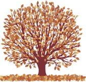 De herfst tree13807 Stock Foto's