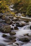 De herfst, Tremont, Smokies NP, TN Stock Foto's