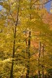 De herfst, Tremont, Smokies NP, TN Stock Afbeeldingen