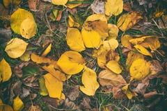 De herfst in tuin, gele bladeren Stock Foto