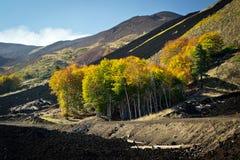 De herfst tussen de lava Royalty-vrije Stock Foto's