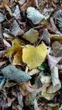 De herfst van beeldenserie/bladeren 2 Stock Foto