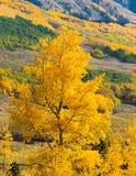 De Herfst van Colorado stock foto's