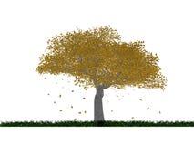 De herfst van de boom Royalty-vrije Stock Afbeelding