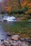 In de herfst van de stroom Stock Afbeeldingen