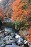 In de herfst van de stroom Stock Fotografie