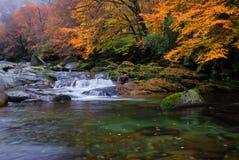 In de herfst van de stroom Royalty-vrije Stock Fotografie