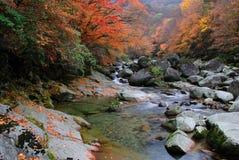 In de herfst van de stroom Stock Foto's