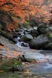 In de herfst van de stroom Royalty-vrije Stock Foto's