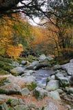 In de herfst van de stroom Stock Foto