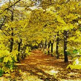 De herfst in van de vicchioboom van Toscanië gele mugello Royalty-vrije Stock Foto