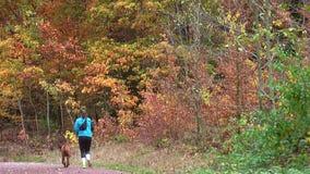 De herfst van 2018 De herfst in het bosmeisje - de atletenlooppas langs de bosweg stock videobeelden