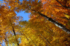 De herfst van het landschap in het bos royalty-vrije stock foto
