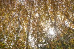 De herfst Van het Middenoosten stock foto's