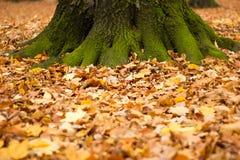 De herfst van Kenigsbergkaliningrad Stock Afbeelding