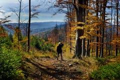 De herfst van kleuren royalty-vrije stock fotografie