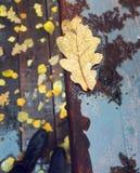 De herfst van Moskou is koud en nat Stock Foto's