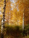 De herfst van Rusland Royalty-vrije Stock Foto's