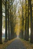De herfst van wegbomen Stock Afbeelding