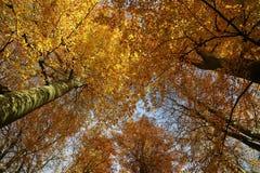 De herfst veluwe hout stock afbeeldingen