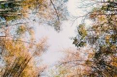 De herfst, veranderen de bomen kleur Stock Foto