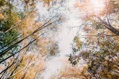 De herfst, veranderen de bomen kleur Royalty-vrije Stock Afbeelding