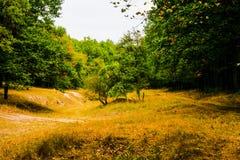 De herfst vergankelijk bos stock foto's