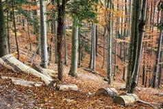 De herfst vergankelijk kleurrijk bos, natuurlijk seizoengebonden landschap royalty-vrije stock afbeelding
