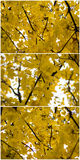 De herfst vergeelt bladerencollage Stock Afbeeldingen