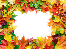 De herfst verlaat frame Royalty-vrije Stock Afbeeldingen