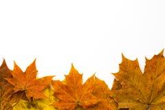 De herfst verlaat grens royalty-vrije stock afbeeldingen