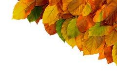 De herfst verlaat Grens Royalty-vrije Stock Afbeelding