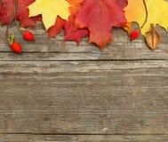 De herfst verlaat grens Stock Fotografie