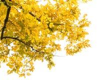 De herfst verlaat kader Stock Afbeelding